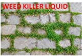 Best Lawn Weed Killers - Weed Killer Liquid for Lawn and Garden Review