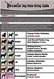 Arcadian Mikrofaser Hundehandtuch perfekte Luxusgeschenk für ihren vierbeinigen Freund. Aus hochqualitativem Mikrofaserstoff hergestellt, federleicht, super aufnahmefähig und extrem schnell trocknend - 2