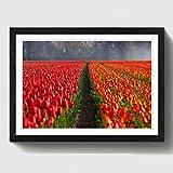 BIG Box Art Blume Tulpen Niederlande Landschaft Print mit