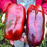 Bloom Green Co. Heißer Verkauf! 100 Riesen-Paprika Pflanzen leicht -Marconi -DIY Home Garten Gemüsepflanze guter Geschmack * Bonsai Organisch, JF7OS9 wachsen