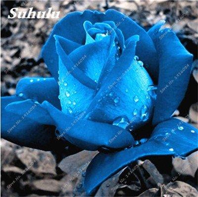 100 pièces / sac Couleur Rare Rose Graines Outdoor Bonsai Graines de fleurs vivaces Fleurs Graines Plante en pot pour jardin Décor 1