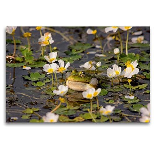 Premium Textil-Leinwand 120 x 80 cm Quer-Format Wasserhanenfuss | Wandbild, HD-Bild auf Keilrahmen, Fertigbild auf hochwertigem Vlies, Leinwanddruck von Winfried Erlwein