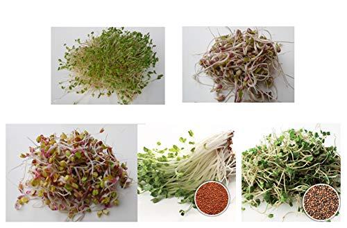 500 g BIO Keimsprossen Mischung -Easy Start MIX- Keimsaat 5 x 100 g Samen für die Sprossenzucht Alfalfa, Mungobohnen, Radies, Kresse, Salatrauke Sprossen Microgreen Mikrogrün