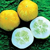 SeeKay Cucumber Lemon - 100 seeds - Vegetable