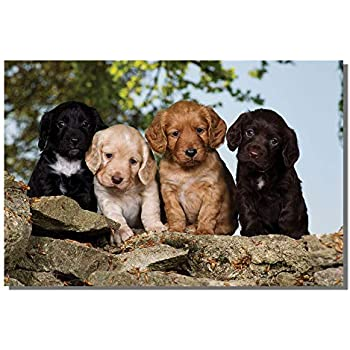 Working Cocker Spaniel Puppies Card Amazoncouk Office Products