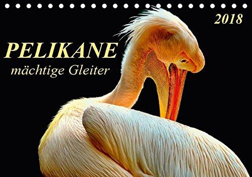Pelikane - mächtige Gleiter (Tischkalender 2018 DIN A5 quer): Pelikane - tollpatschige Läufer und elegante Gleiter. (Monatskalender, 14 Seiten ) (CALVENDO Tiere) (Läufer-welt Kalender)