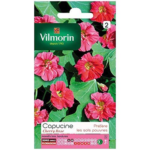 Vilmorin Sachet graines Capucine Cherry Rose