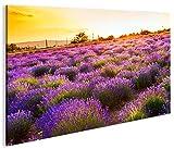 islandburner Bild Bilder auf Leinwand Lavendel Busch 1K XXL Poster Leinwandbild Wandbild Dekoartikel Wohnzimmer Marke