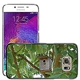 Bild Hart Handy Schwarz Schutz Case Cover Schale Etui // M00135502 Nistkasten Vogelhaus Birds Baum // Samsung Galaxy S6 (Not Fits S6 EDGE)