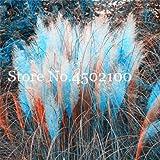 Nuova 200 pc arcobaleno Erba Bonsai Fiore acquatico s decorazione domestica Giardino di fiore a Azzurro 1 (SEMI SOLO)