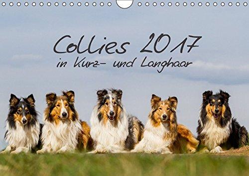 Collies 2017 in Kurz- und Langhaar (Wandkalender 2017 DIN A4 quer): Ein Kalender für alle Collie- und Hundefreunde (Monatskalender, 14 Seiten) por Christine Hemlep