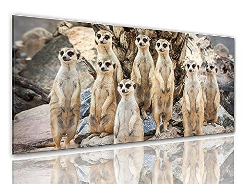 BILDER-MANUFAKTUR LEINWAND KUNSTDRUCK WANDBILD BILD BILDER, 8307 Farbe 1, 100 cm x 40 cm ERDMÄNNCHEN SURIKATE SCHARRTIER NATUR TIERE MANGUSTEN AFRIKA