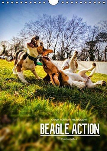 Beagle Action - Wilde Kuscheltiere (Wandkalender 2018 DIN A4 hoch): Beagles beim Spielen (Monatskalender, 14 Seiten ) (CALVENDO Tiere) [Kalender] [Apr 13, 2017] Hartmann, Gregor (Beagle-kalender)