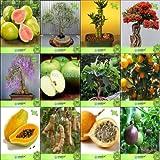 Pinkdose Bonsai Samen: Samen für Garten Balkon Combo Thailand Guava, Eucalyptus Grandis, Bambus, Gulmoharjacaranda, Apfel, F