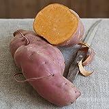 """Gartenbau Friedrich Speise-Süßkartoffel """"Erato® Orange"""" im 13er Topf"""