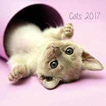 Grupo Erik Editores Cats - Calendario 2017, 24 x 24 cm