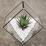 Ultra 10 x 10 x 10 Premium cubo terrario de calidad cristal con un borde de corte perfecto para musgo y plantas o adornos (10 x 10 x 10)