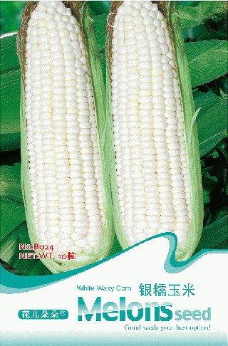 3 Packungen 30 von Weiß wächserne Maissamen, Weißer Mais Gemüse-Saatgut Gesunde B024