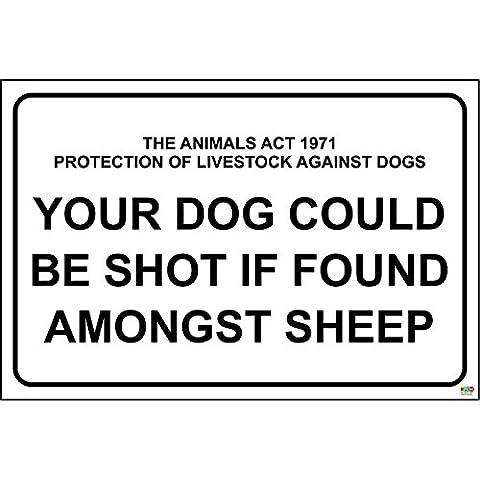 La legge 1971 protezione degli animali da allevamento contro cani cane potrebbe essere SHOT Se si trova tra le pecore 1,2 mm-Cartello in plastica rigida, 400 x 300 mm