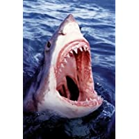 1ART1 52903 Haifische-The Great White Shark Poster 91 x 61 CM