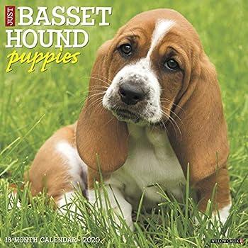 Just Basset Hound Puppies 2020 Calendar