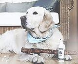 Quiko Canosept Zahnpflege Spray für Hunde, 100 ml - 2
