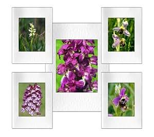 Five-foto in formato A5, motivo: orchidea biglietti di auguri