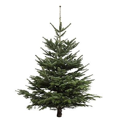 Weihnachtsbaum Nordmanntanne, ca. 145 - 160 cm hoch, geschlagen von Amazon.de Pflanzenservice auf Du und dein Garten