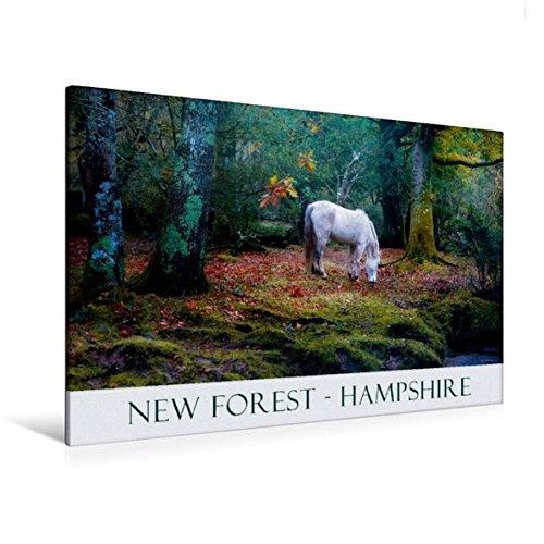Premium Textil-Leinwand 120 cm x 80 cm quer, Ein Bild aus dem Kalender New Forest Hampshire | Wandbild, Bild auf Keilrahmen, Fertigbild auf echter Leinwand, Leinwanddruck (CALVENDO Natur) (New Hampshire-kalender)