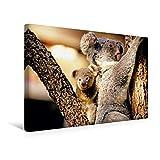 Calvendo Premium Textil-Leinwand 45 cm x 30 cm Quer, Gut festhalten - Koala Mutter trägt Ihr Baby huckepack und klettert auf Einen Baum | Wandbild, Bild auf und Jungtier, Australien Tiere Tiere