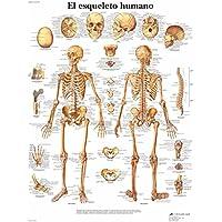3B Scientific Impreso En Papel, el Esqueleto Humano