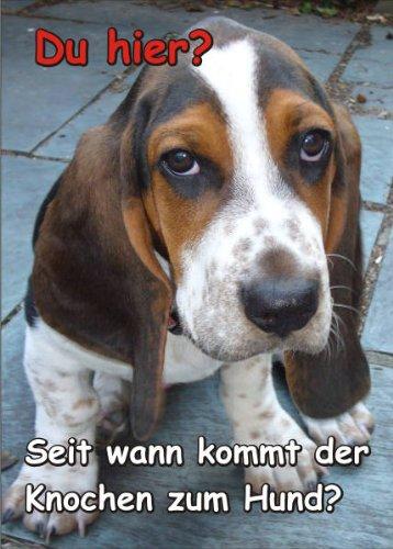 INDIGOS UG - Türschild FunSchild - SE205 DIN A4 ACHTUNG Hund Basset Hound - für Käfig, Zwinger, Haustier, Tür, Tier, Aquarium - aus hochwertigem Alu-Dibond beschriftet sehr stabil -