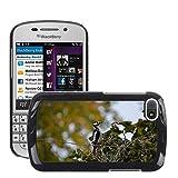 hello-mobile Bild Hart Handy Schwarz Schutz Case Cover Schale Etui // M00137320 Buntspecht Vogel // BlackBerry Q10