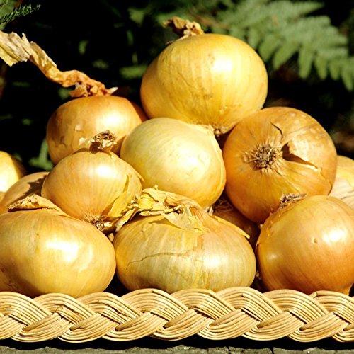 Graines d'Oignon Jaune Paille des Vertus (4 grammes)