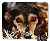 Mauspads - Hundeaugen besorgt nahe Tierheim-Zuneigung