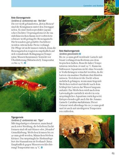 Kleine Aquarien: Extra: Nano-Aquarien -