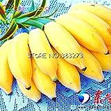 Pinkdose 30 / bag Bananenbaum sehen Fruit Rare Kleine Mini Hainan Chinese Banane sehen Musa Dwarf Basjoo Außen Garten sehen * Pflanzen: Lila