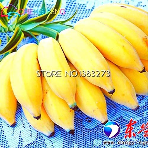 Shopmeeko Graines: 30 / sac Bananier voir Fruit voir Rare Petit Mini Hainan Banana chinoise voir Musa voir nain basjoo extérieur Jardin des plantes *: Violet
