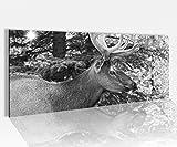 Acrylglasbild 100x40cm schwarz weiss Hirsch Tier Wald Geweih Elch Baum Natur Gesicht Acrylbild Acryl Druck Acrylglas Acrylglasbilder 14A9856, Acrylglas Größe1:100cmx40cm