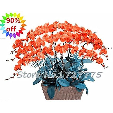 ¡Venta! 100pcs Nueva Primavera Tauro Muy fácil Semillas de Plantas Novel planta perenne de la orquídea Flores hermosas para los cuartos de envío gratuito