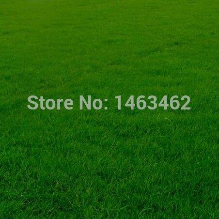 Gartengrassamen, vier Jahreszeiten grünen Wiesen-Rispengras Samen 300pcs