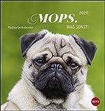 Mops Postkartenkalender Kalender 2020