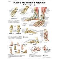 3B Scientific VR4176L Piede e Articolazione del Piede