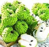 Pinkdose® Neue Hausgartensaatn 4 Frische Sourop Guanabana Graviola Annona Muricata Frucht-Semillas
