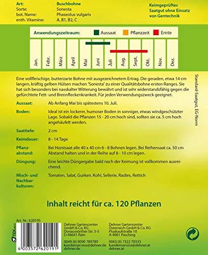 """Dehner Gemüse-Saatgut, Buschbohne, """"Sonesta"""", 5er Pack (5 x 60 g)"""