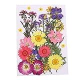 circulor Gepresste Blumen, Gemischte Getrocknete Echt-Blumen, Für DIY-Kunst, Blumendekor, Sammlungen, Als Geschenk