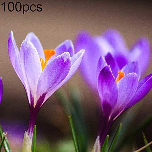Zoom IMG-1 xdised9xsmao 100pz zafferano crocus sativus