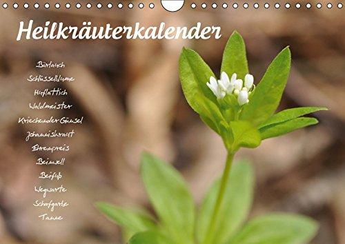 HeilkräuterkalenderAT-Version (Wandkalender 2019 DIN A4 quer): Pflanzenportraits zu allen...
