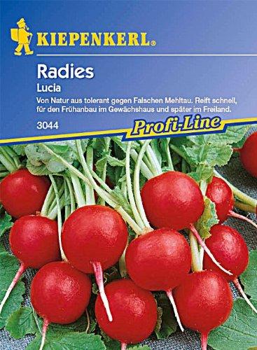 Sperli Gemüsesamen Radieschen Lucia, F 1, grün
