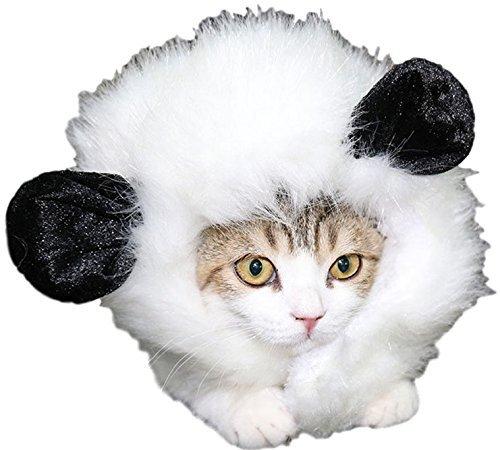 Haustier Katze oder kleiner Hund Panda Löwe Maus Mähne Kapuze Ohren lustig Halloween Kostüm Kleid Outfit - weiß Panda
